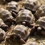 tortoises, tortoise and hare, dream metaphor, dream symbol